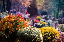 Chrysanthemum Flower In The Ce...