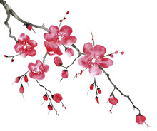 A Branch Of A Blossoming Tree....