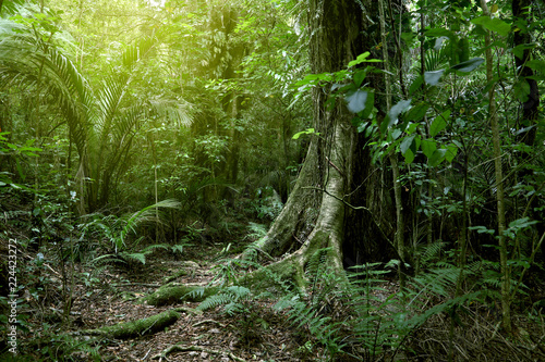 Photo  Large tree in jungle