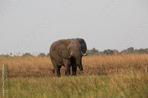 Photo  elephant in africa in a group