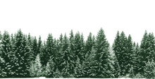 Spruce Tree Forest Covered By Fresh Snow During Winter Christmas Time. The Winter Scene Is Duotone With Limited Palette Colours. Vector Illustration.