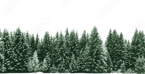 Obraz na płótnie Spruce tree forest covered by fresh snow during Winter Christmas time