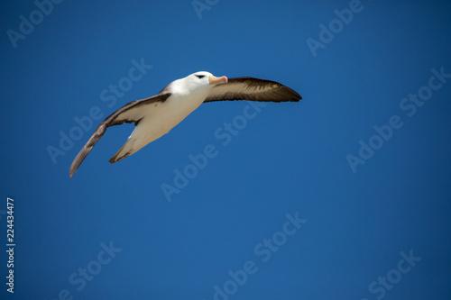 Fotografia  seagull in the sun in antarctica gull