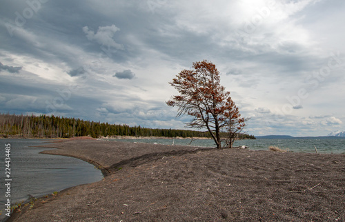 Lone tree on peninsula of sand called Hard Road to Follow on the banks of Yellowstone Lake in Yellowstone National Park in Wyoming United States