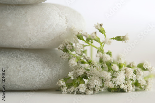 Fotografie, Obraz  softness of nature