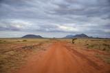 Fototapeta Sawanna - Tsavo East Kenya, Baum, National Park, Savanne, Wüste, Berge
