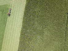 An Amish Farmer And His Two Horse Team Begin To Plow The Corn Fields For End Of Season Corn And Feed Viewed From An Aerial Drone