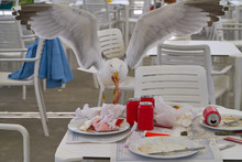 Seagull Eating On A Restaurant Table