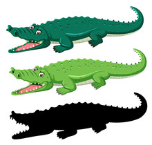 Different Graphic Type Of Croc...