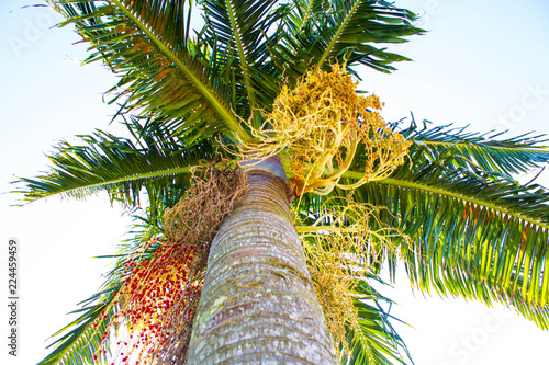 Foto op Plexiglas Palm boom palm tree on beach