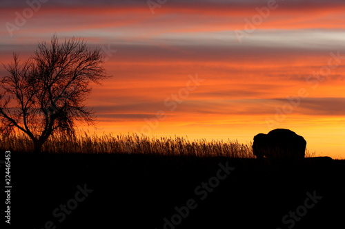 Foto op Canvas Baksteen Silhouette of bison and tree at sunset - North Dakota