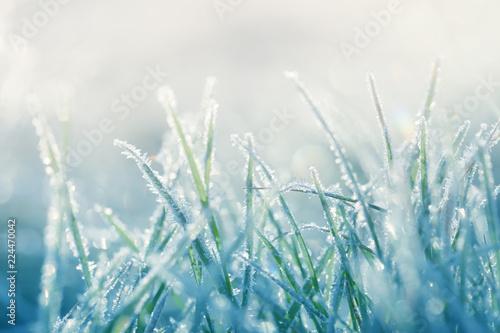 Fotografie, Tablou Grass in the frost