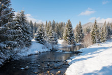 Winter Water Stream In The Forest