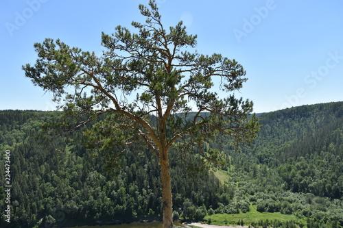 Spoed Foto op Canvas Khaki tree on the hill