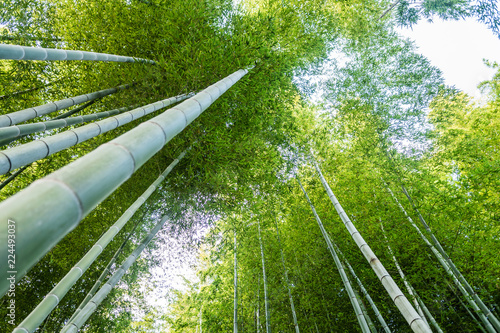 Foto op Plexiglas Bamboe Bamboo forest in kyoto, Japan