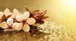 Leinwandbild Motiv Fresh pink flowers - web banner, background, greeting card idea