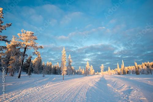 Foto op Aluminium Blauw Snowy landscape, frozen trees in winter in Saariselka, Lapland, Finland