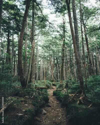 八ヶ岳 森の中のハイキングトレイル