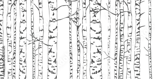 Slika na platnu Birch trees sketch