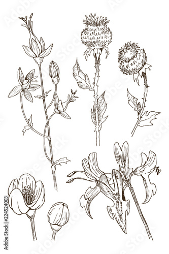 Fototapety, obrazy: Set of herbal and wild plants, berry and branches. Vintage botanical engraved illustration. Vector hand drawn natural elements. Sketch style.