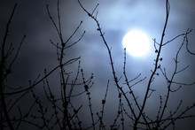 Soft Focus Night Scene Of Full Moon And Bare Tree Branches, In A Hazy, Cloudy Sky. Spooky Or Eerie Look, With Fog Or Mist Over The Moon.