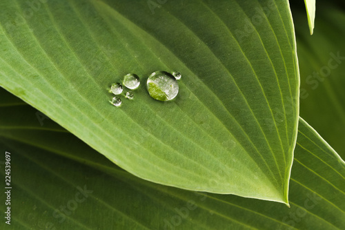 Fotografía  Perfect, round drops of water on a large green leaf