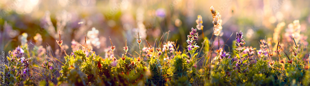 Fototapeta wild flowers and grass closeup, horizontal panorama photo