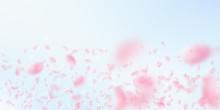 Sakura Petals Falling Down. Romantic Pink Flowers Gradient. Flying Petals On Blue Sky Wide Backgroun