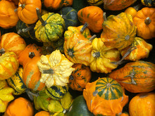 Assortment Of Small Ornamental Pumpkins, Autumn Or Fall Themed Background Image