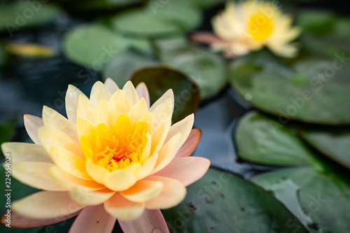 Staande foto Lotusbloem A close-up with the beauty of the lotus