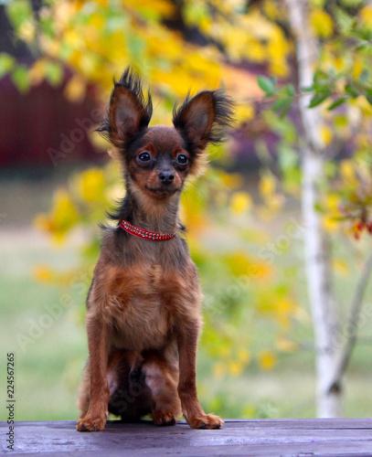 Prime Cute Red Dog Posing On A Wooden Bench In The Autumn Frankydiablos Diy Chair Ideas Frankydiabloscom