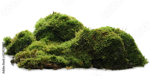 Cuadros en Lienzo Green moss with grass isolated on white background