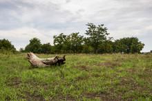 A Fallen Dead Tree Trunk In A Green Summer Field, Coarse Woody Debris Under A Moody Overcast Sky