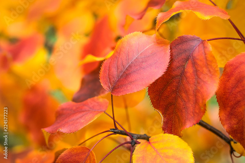 Autumn leaves on a tree, selective focus, blurred background