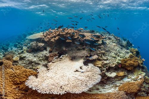 Bleaching coral in australia