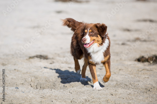 Photo  Dogs at the beach