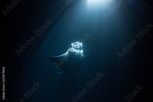 manta ray swimming torwards moonlight