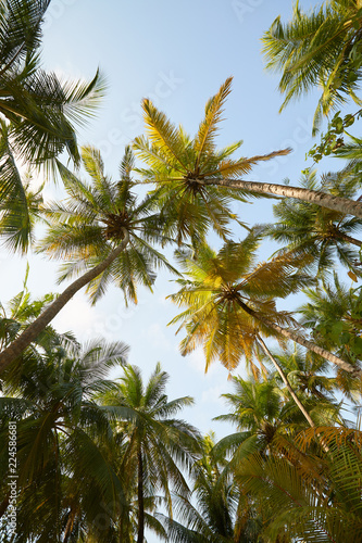 Foto op Plexiglas Palm boom Coconut palm trees perspective view on exotical tropical island