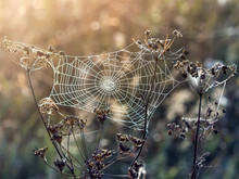 Web Of A Spider Against Sunris...