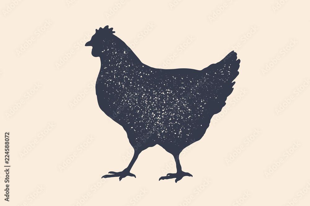 Fotografie, Obraz Hen, chicken