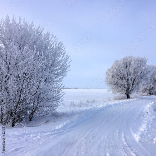 Fotobehang Bomen wood in frost, tree in frost, snowy road, snow-covered steppe, frosty day