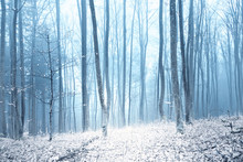 Magic Foggy Winter Day In Snowy Forest During Snowfall.