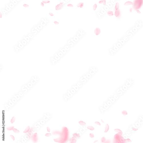 Sakura petals falling down. Romantic pink flowers borders. Flying petals on white square background. © Begin Again
