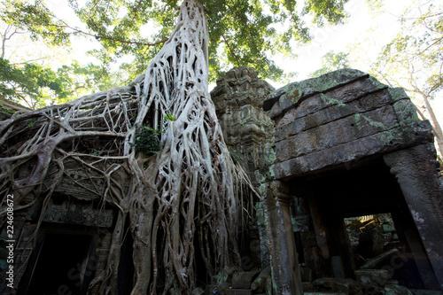 фотография  Tomb Raider Tree in Ta Prohm Temple, Temples of Angkor, Cambodia