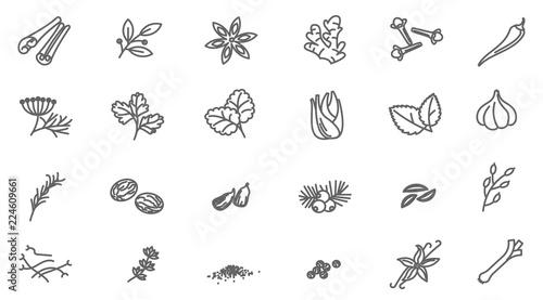 Fototapeta Thin line spices vector icon set. obraz