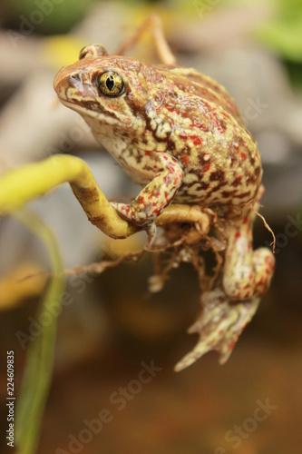 Tuinposter Kikker photogenic frog