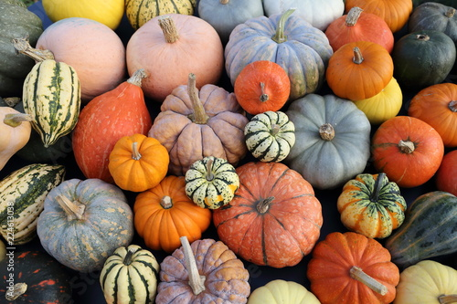 Pumpkins and  squash.