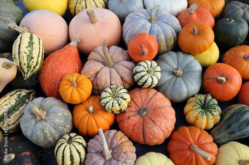 Foto Pumpkins and  squash.