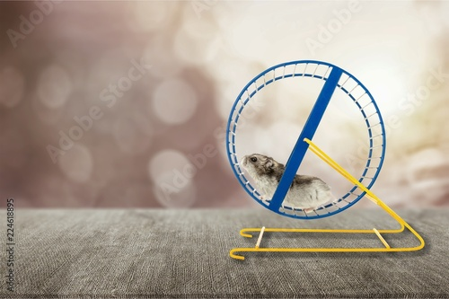 Hamster running in circle on wooden table