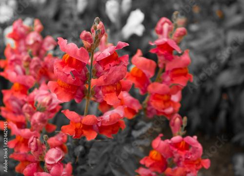 Carta da parati multi-colored flowers delphinium